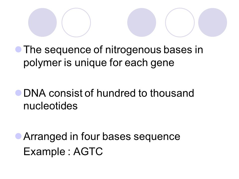 The sequence of nitrogenous bases in polymer is unique for each gene DNA consist of hundred to thousand nucleotides Arranged in four bases sequence Ex