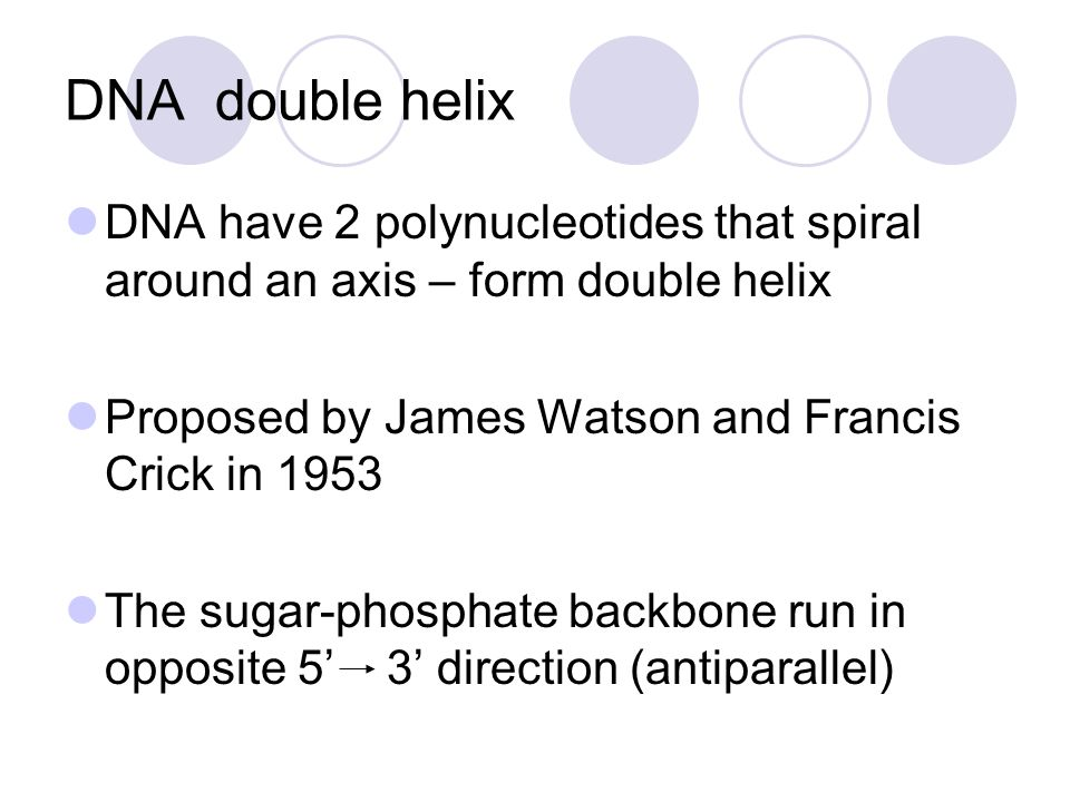 DNA double helix DNA have 2 polynucleotides that spiral around an axis – form double helix Proposed by James Watson and Francis Crick in 1953 The suga