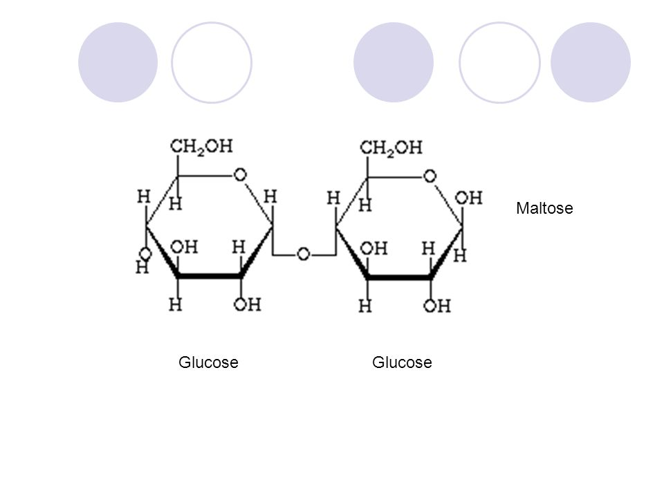 Glucose Maltose