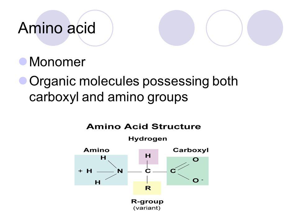 Amino acid Monomer Organic molecules possessing both carboxyl and amino groups