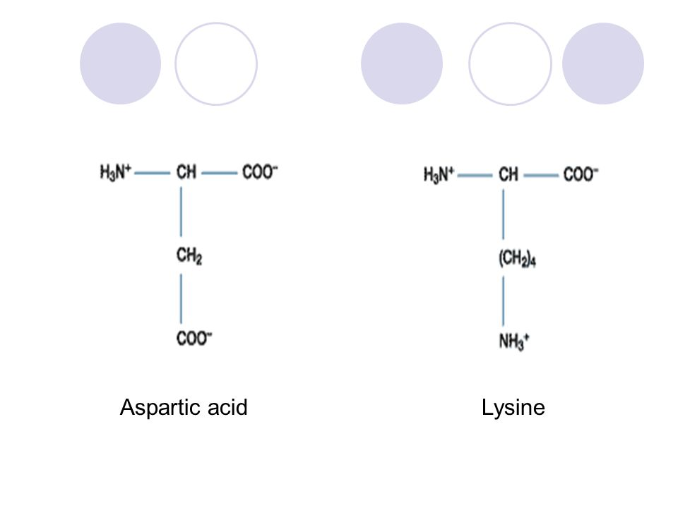 Aspartic acidLysine