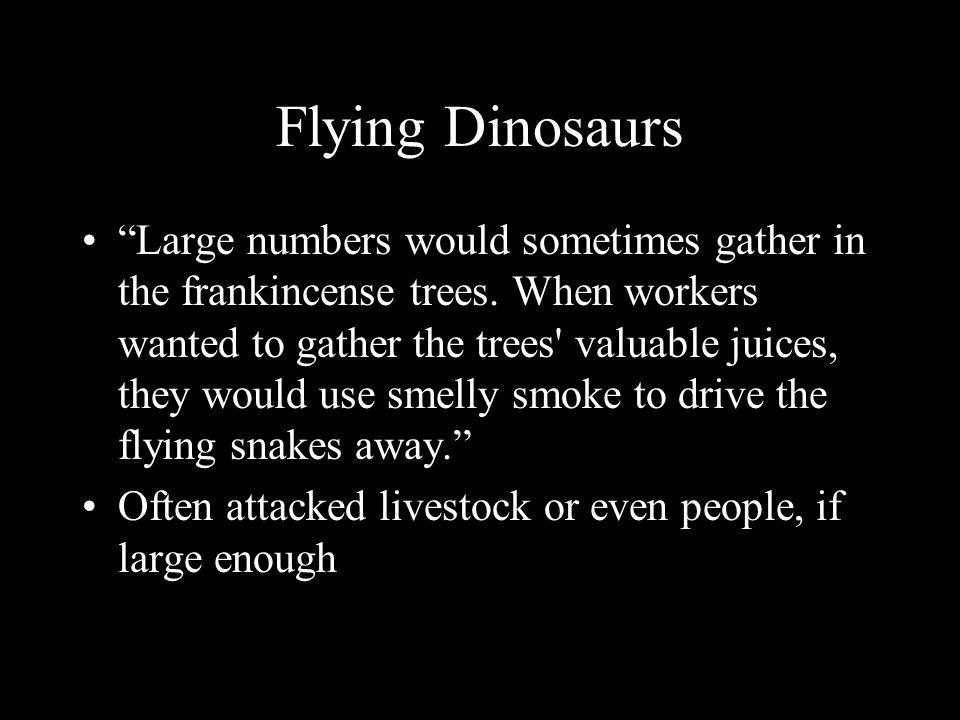 Flying Dinosaurs Large numbers would sometimes gather in the frankincense trees.