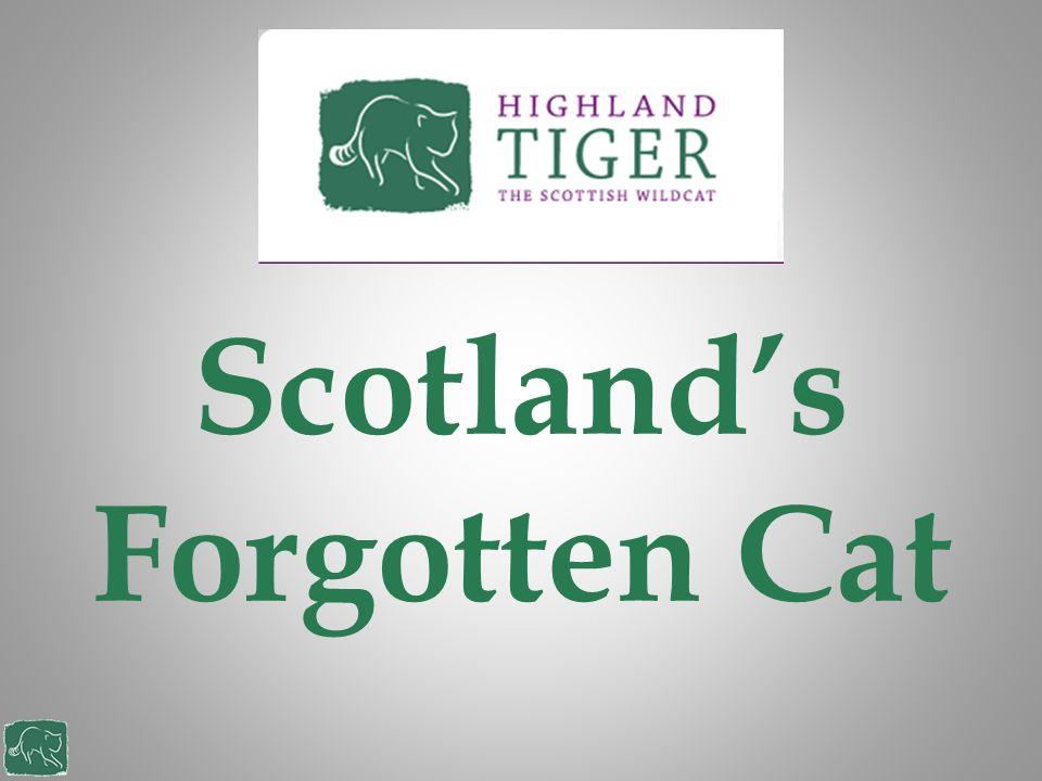 Scotland's Forgotten Cat