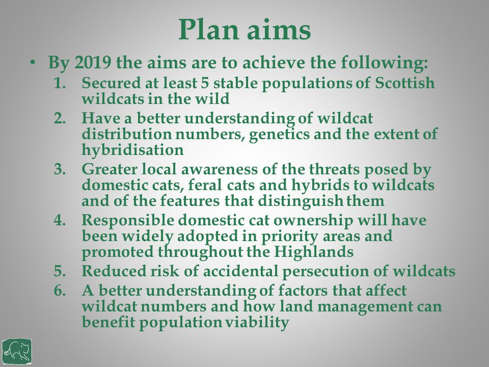 Plan aims By 2019 the aims are to achieve the following: 1.Secured at least 5 stable populations of Scottish wildcats in the wild 2.Have a better unde