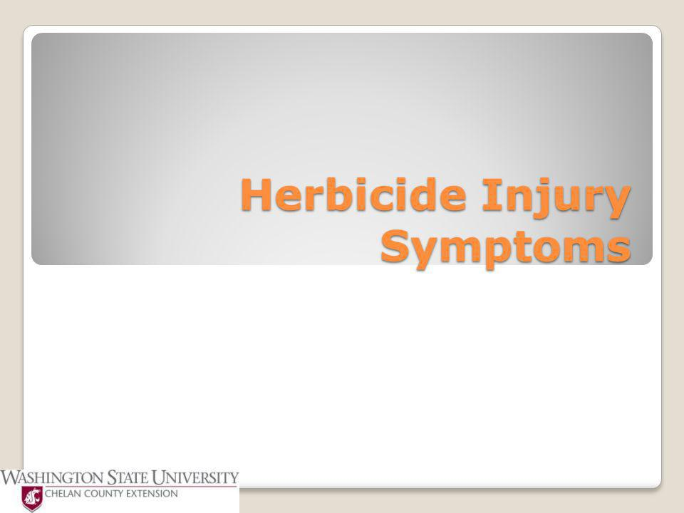 Herbicide Injury Symptoms