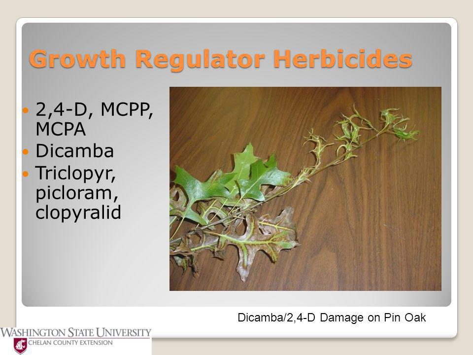 Growth Regulator Herbicides 2,4-D, MCPP, MCPA Dicamba Triclopyr, picloram, clopyralid Dicamba/2,4-D Damage on Pin Oak