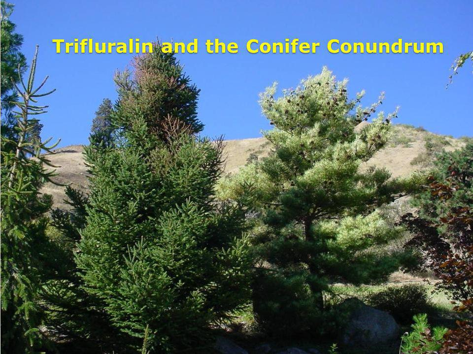 Trifluralin and the Conifer Conundrum