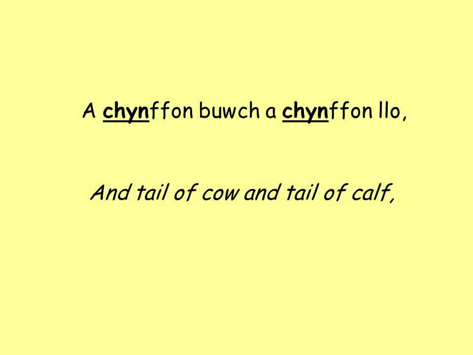 A chynffon buwch a chynffon llo, And tail of cow and tail of calf,