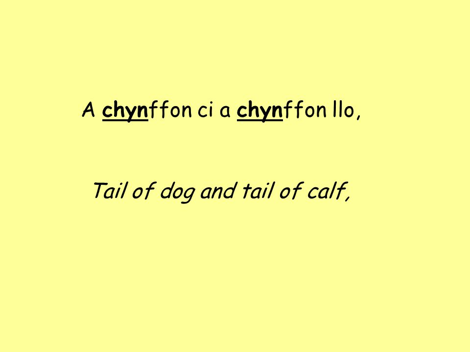 A chynffon ci a chynffon llo, Tail of dog and tail of calf,