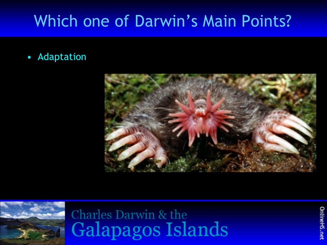 Which one of Darwin's Main Points? Adaptation