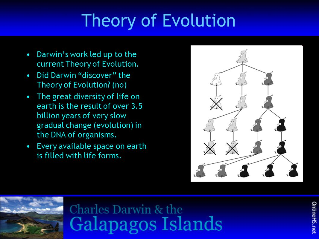 """Theory of Evolution Darwin's work led up to the current Theory of Evolution. Did Darwin """"discover"""" the Theory of Evolution? (no) The great diversity o"""