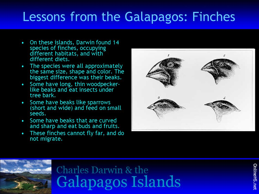 Lessons from the Galapagos: Finches On these islands, Darwin found 14 species of finches, occupying different habitats, and with different diets. The