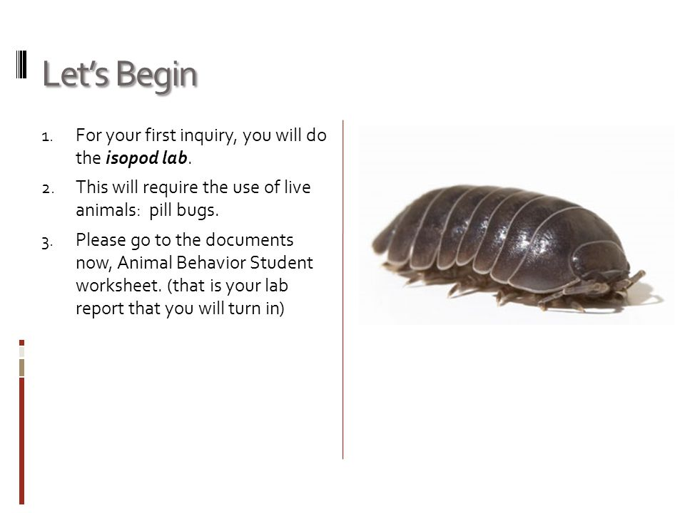 Let's Begin 1. For your first inquiry, you will do the isopod lab. 2. This will require the use of live animals: pill bugs. 3. Please go to the docume