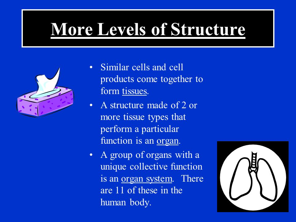 More Levels of Structure Similar cells and cell products come together to form tissues. A structure made of 2 or more tissue types that perform a part