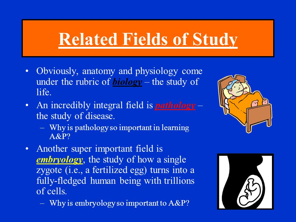 Related Fields of Study Obviously, anatomy and physiology come under the rubric of biology – the study of life. An incredibly integral field is pathol