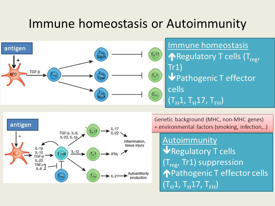 Immune homeostasis or Autoimmunity Autoimmunity  Regulatory T cells (T reg, Tr1) suppression  Pathogenic T effector cells (T H 1, T H 17, T FH ) Gen