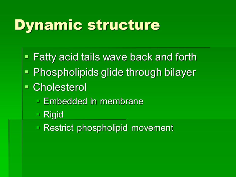 Dynamic structure  Fatty acid tails wave back and forth  Phospholipids glide through bilayer  Cholesterol  Embedded in membrane  Rigid  Restrict