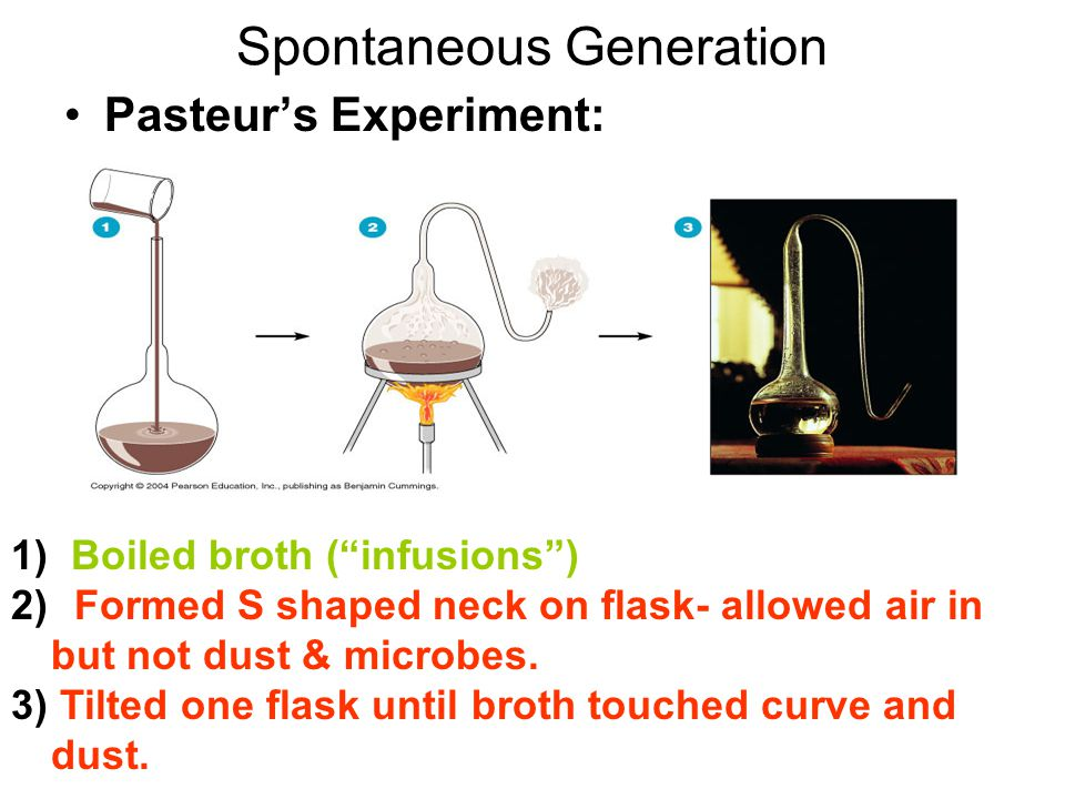 Spontaneous Generation Pasteur's Experiment: 1) Boiled broth ( infusions ) 2) Formed S shaped neck on flask- allowed air in but not dust & microbes.