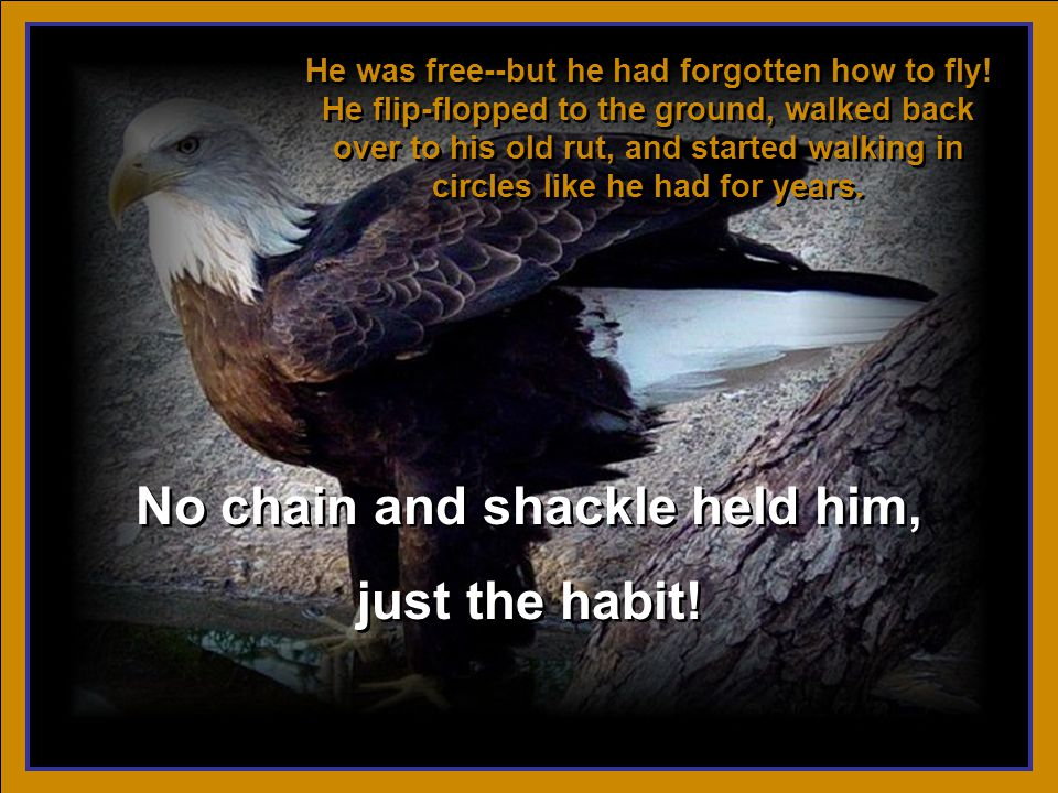 A man once owned an eagle, and for many years kept him chained to a stake.