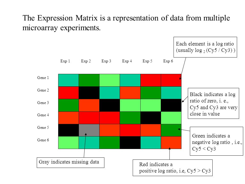 The Expression Matrix is a representation of data from multiple microarray experiments.