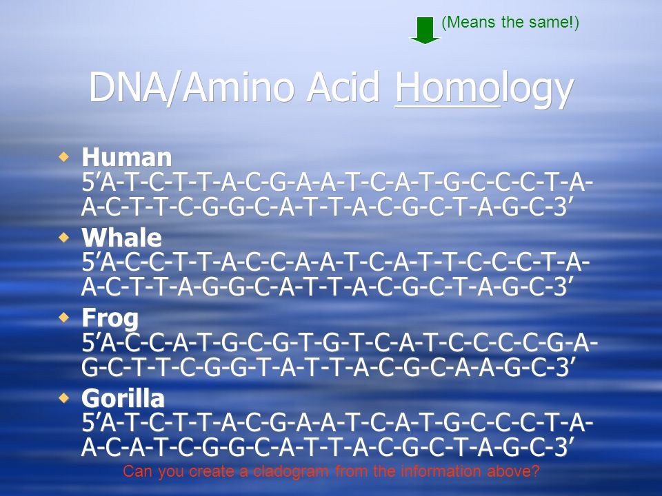 DNA/Amino Acid Homology  Human 5'A-T-C-T-T-A-C-G-A-A-T-C-A-T-G-C-C-C-T-A- A-C-T-T-C-G-G-C-A-T-T-A-C-G-C-T-A-G-C-3'  Whale 5'A-C-C-T-T-A-C-C-A-A-T-C-A-T-T-C-C-C-T-A- A-C-T-T-A-G-G-C-A-T-T-A-C-G-C-T-A-G-C-3'  Frog 5'A-C-C-A-T-G-C-G-T-G-T-C-A-T-C-C-C-C-G-A- G-C-T-T-C-G-G-T-A-T-T-A-C-G-C-A-A-G-C-3'  Gorilla 5'A-T-C-T-T-A-C-G-A-A-T-C-A-T-G-C-C-C-T-A- A-C-A-T-C-G-G-C-A-T-T-A-C-G-C-T-A-G-C-3'  Human 5'A-T-C-T-T-A-C-G-A-A-T-C-A-T-G-C-C-C-T-A- A-C-T-T-C-G-G-C-A-T-T-A-C-G-C-T-A-G-C-3'  Whale 5'A-C-C-T-T-A-C-C-A-A-T-C-A-T-T-C-C-C-T-A- A-C-T-T-A-G-G-C-A-T-T-A-C-G-C-T-A-G-C-3'  Frog 5'A-C-C-A-T-G-C-G-T-G-T-C-A-T-C-C-C-C-G-A- G-C-T-T-C-G-G-T-A-T-T-A-C-G-C-A-A-G-C-3'  Gorilla 5'A-T-C-T-T-A-C-G-A-A-T-C-A-T-G-C-C-C-T-A- A-C-A-T-C-G-G-C-A-T-T-A-C-G-C-T-A-G-C-3' (Means the same!) Can you create a cladogram from the information above?