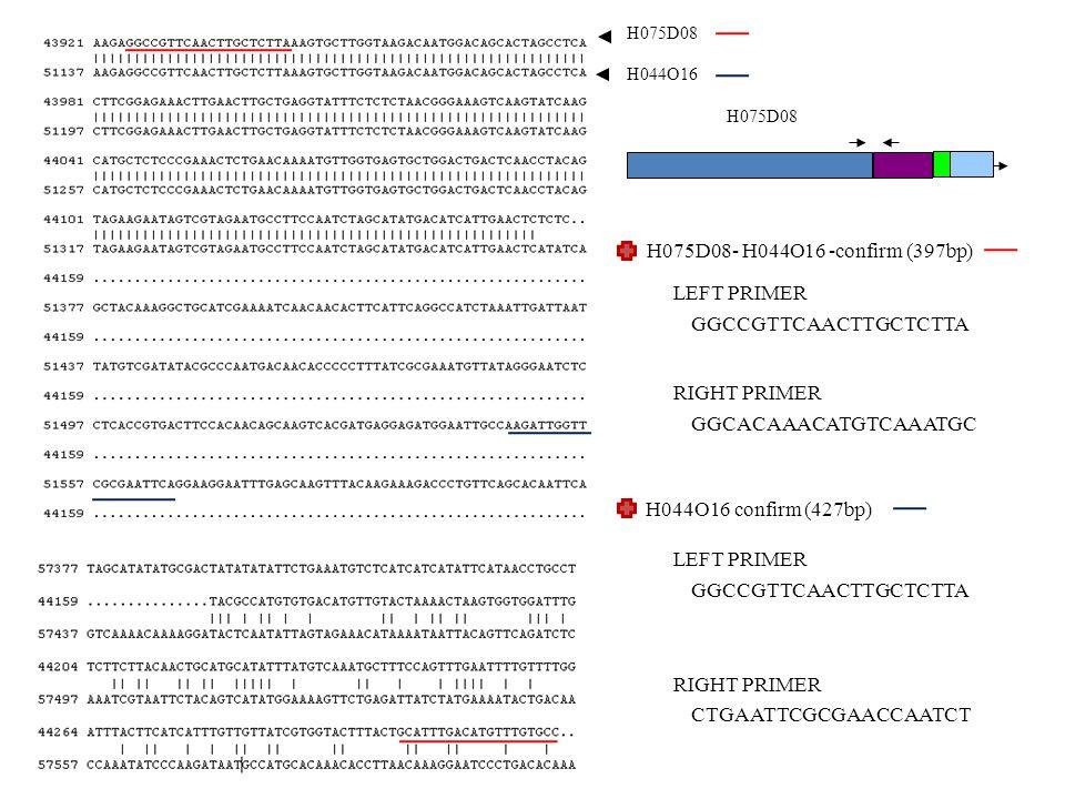 H075D08 H044O16 H075D08 H075D08- H044O16 -confirm (397bp) H044O16 confirm (427bp) GGCCGTTCAACTTGCTCTTA LEFT PRIMER GGCACAAACATGTCAAATGC RIGHT PRIMER GGCCGTTCAACTTGCTCTTA LEFT PRIMER CTGAATTCGCGAACCAATCT RIGHT PRIMER