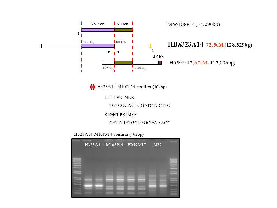 H323A14-M108P14-confirm (462bp) TGTCCGAGTGGATCTCCTTC LEFT PRIMER CATTTTATGCTGGCGAAACC RIGHT PRIMER 111111111111 H323A14-M108P14-confirm (462bp) M108P14H323A14M82H059M17 Mbo108P14 (34,290bp) HBa323A14 72.5cM (128,329bp) H059M17, 67cM (115,036bp) 65331bp 1 40147bp 1 16907bp 26007bp 9.1kb25.2kb 4.9kb