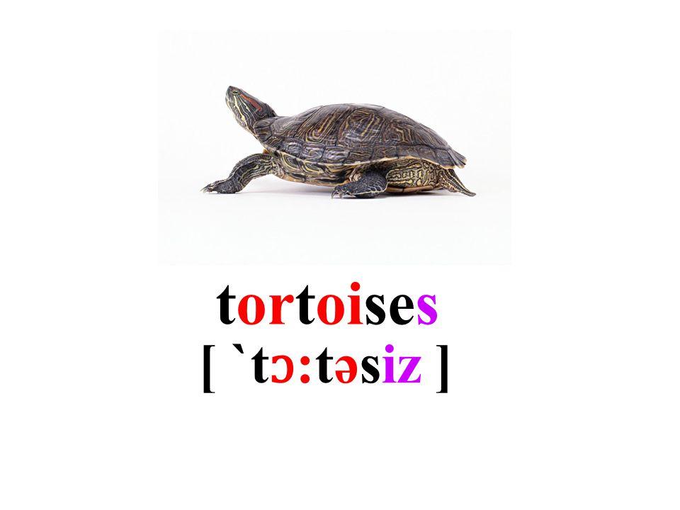 tortoises [ `t ɔ :təsiz ]