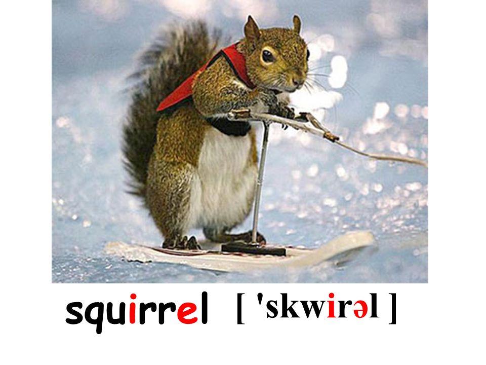 squirrel [ skwirəl ]