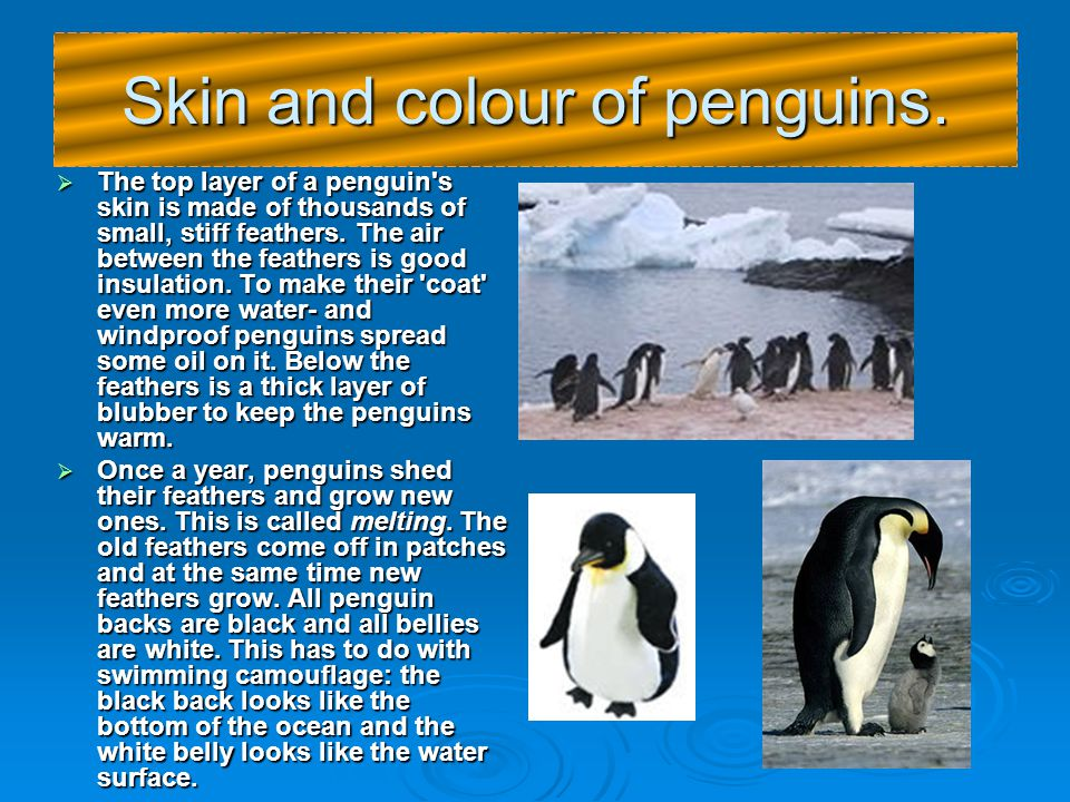 Penguins  Penguins are birds. Most of them live in the sub-Antarctics and on Antarctica.