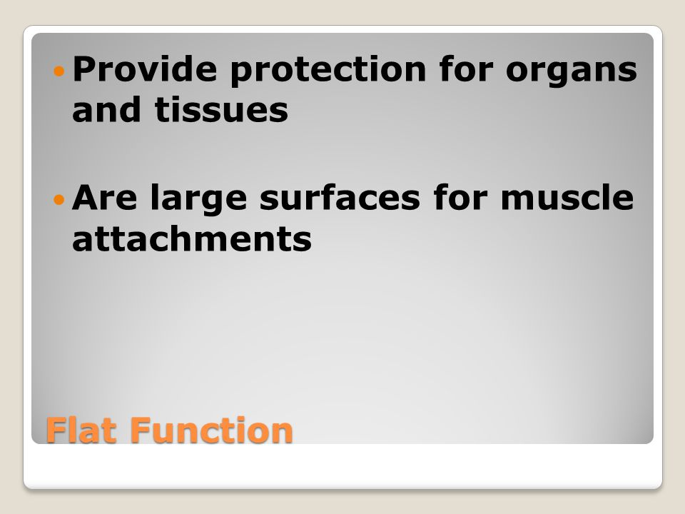 Flat Function Provide protection for organs and tissues Are large surfaces for muscle attachments