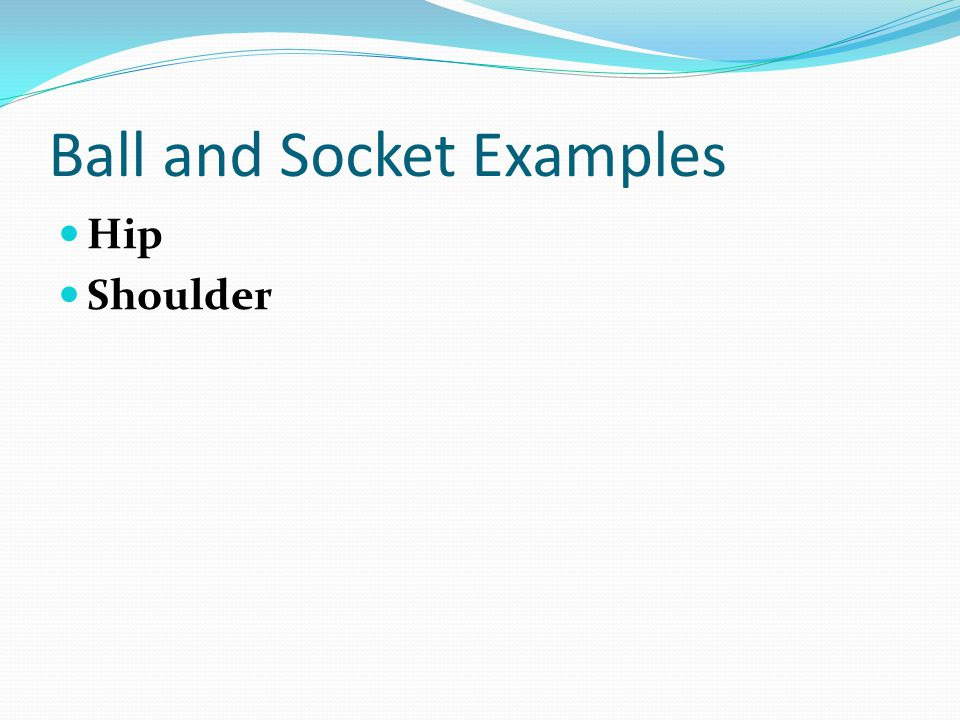 Ball and Socket Examples Hip Shoulder