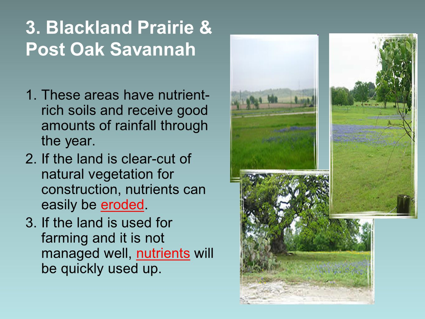 3. Blackland Prairie & Post Oak Savannah 1.These areas have nutrient- rich soils and receive good amounts of rainfall through the year. 2.If the land