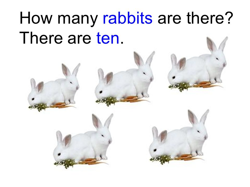 How many rabbits are there? There are ten.