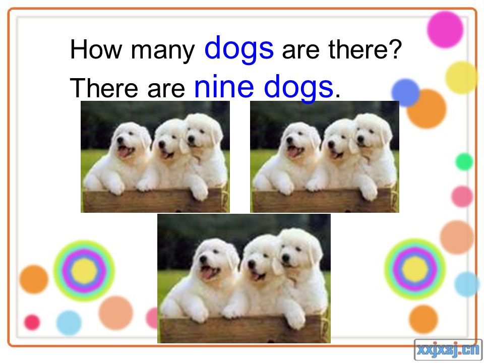 How many dogs are there? There are nine dogs.