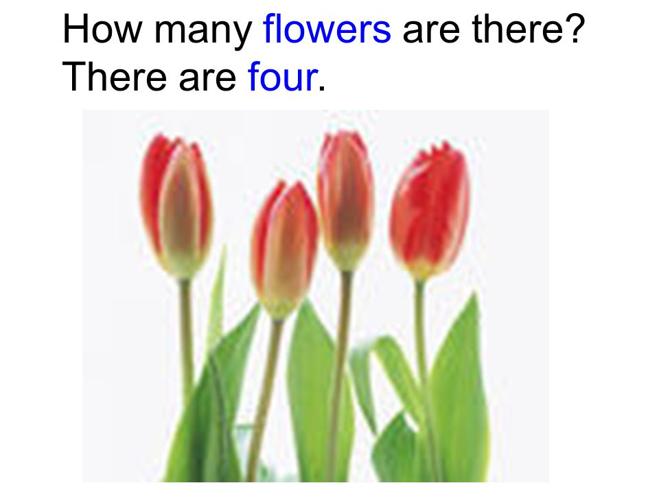 How many flowers are there There are four.