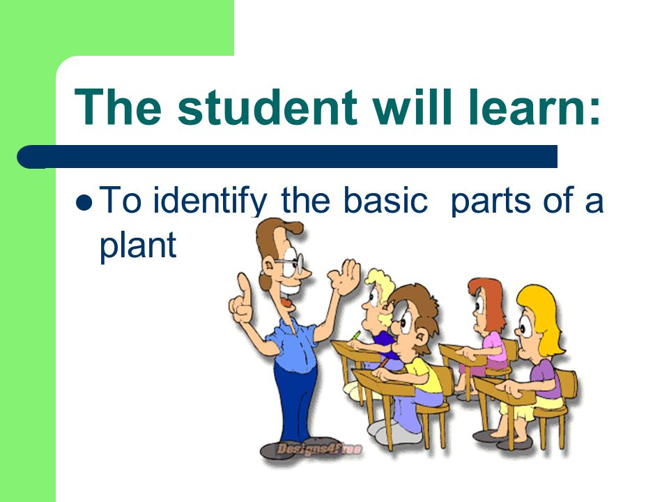 Let's see what you learned: Which part of the plant is usually colored?