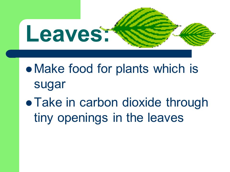 For more practice go to: http://www.hcs.ohio-state.edu/hcs300/glossary/glossary.htm http://classroom.jc-schools.net/sci-units/plants-animals.htm http://www.urbanext.uiuc.edu/gpe/case1/facts.html http://www.firstschoolyears.com/science/worksheets/plants/plants.