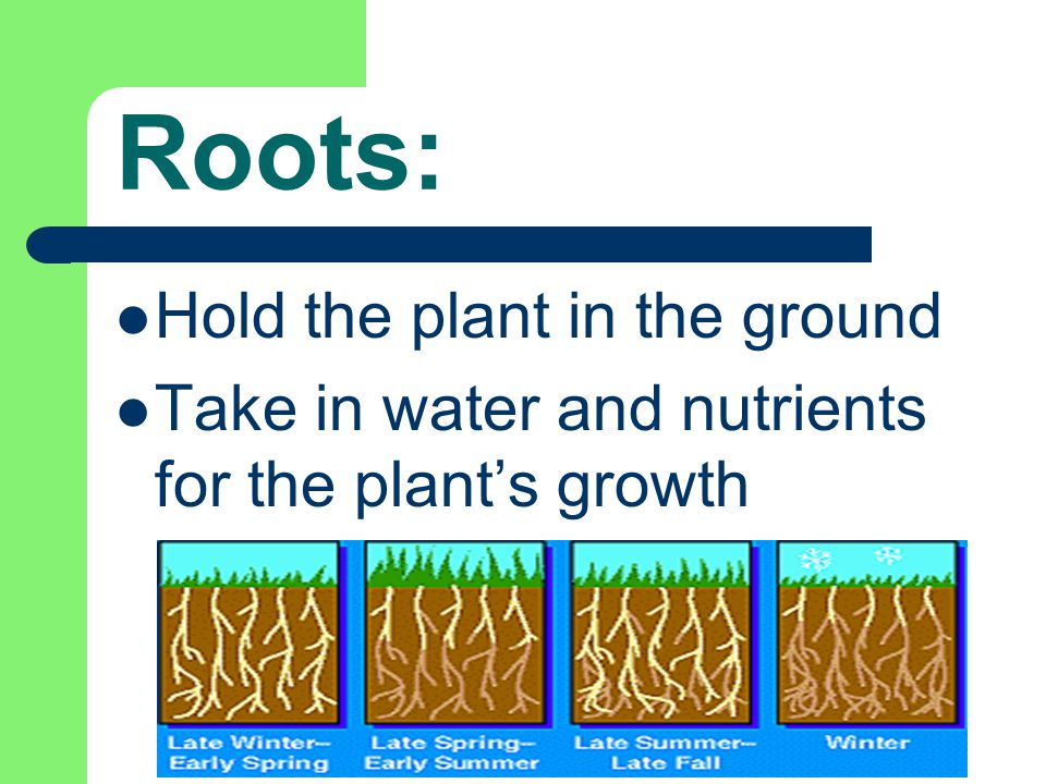 Resources: http://www.hcs.ohio-state.edu/hcs300/glossary/glossary.htm http://classroom.jc-schools.net/sci-units/plants-animals.htm http://www.urbanext.uiuc.edu/gpe/case1/facts.html http://www.firstschoolyears.com/science/worksheets/plants/plants.