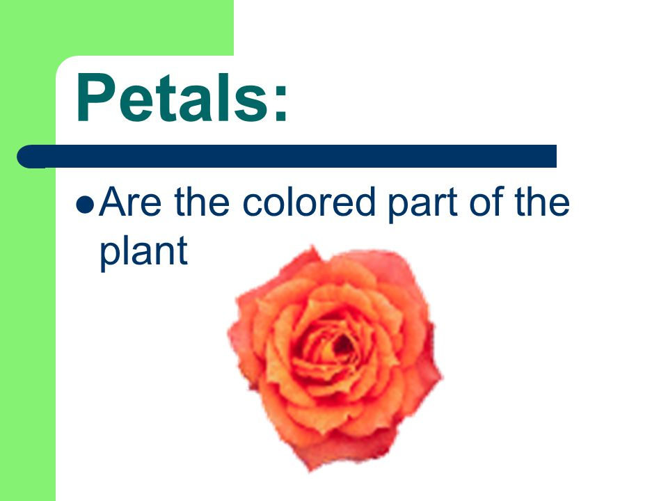 Let's see what you learned: Which part of the plant holds it in the ground?