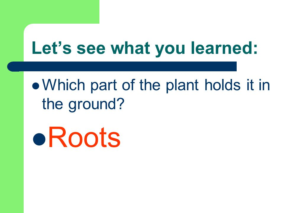 Let's see what you learned: Which part of the plant holds it in the ground? Roots