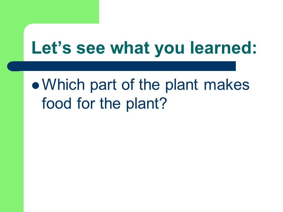 Let's see what you learned: Which part of the plant makes food for the plant? leaves