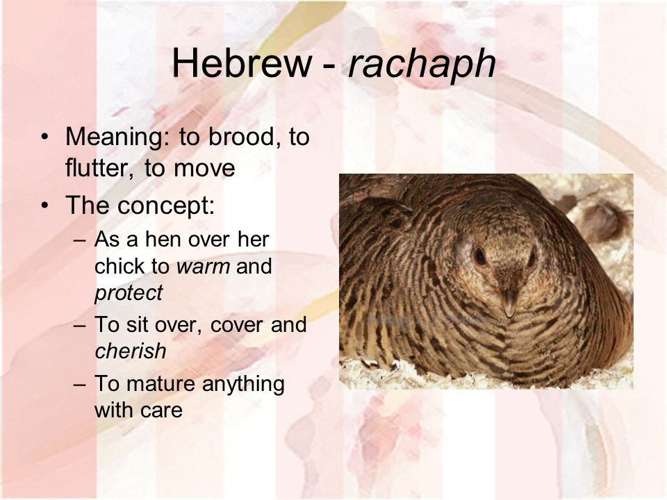 Hebrew - rachaph Meaning: to brood, to flutter, to move The concept: –As a hen over her chick to warm and protect –To sit over, cover and cherish –To