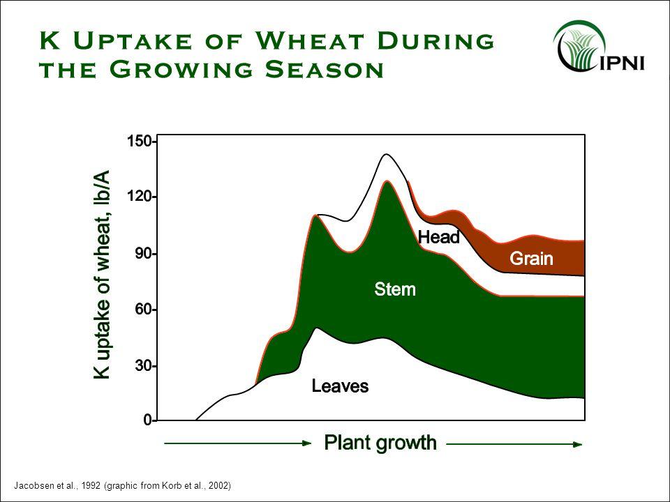 K Uptake of Wheat During the Growing Season Jacobsen et al., 1992 (graphic from Korb et al., 2002)