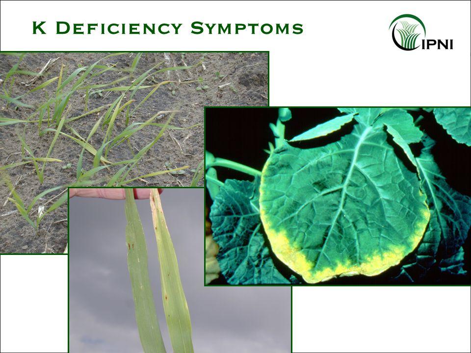 K Deficiency Symptoms