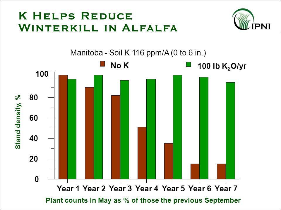 Manitoba - Soil K 116 ppm/A (0 to 6 in.) 100 lb K 2 O/yr No K 100 Year 1Year 2Year 3Year 4Year 5Year 6Year 7 0 20 40 60 80 Stand density, % Plant coun