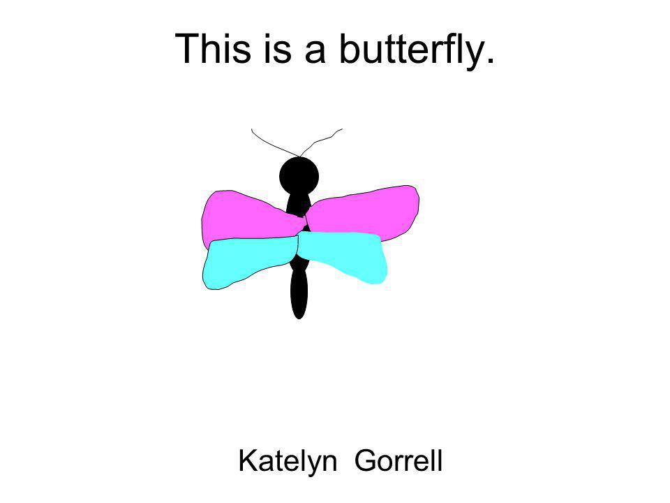 This is a butterfly. Katelyn Gorrell