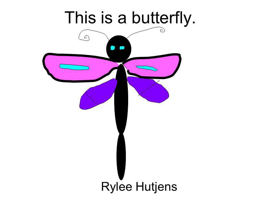 This is a butterfly. Rylee Hutjens
