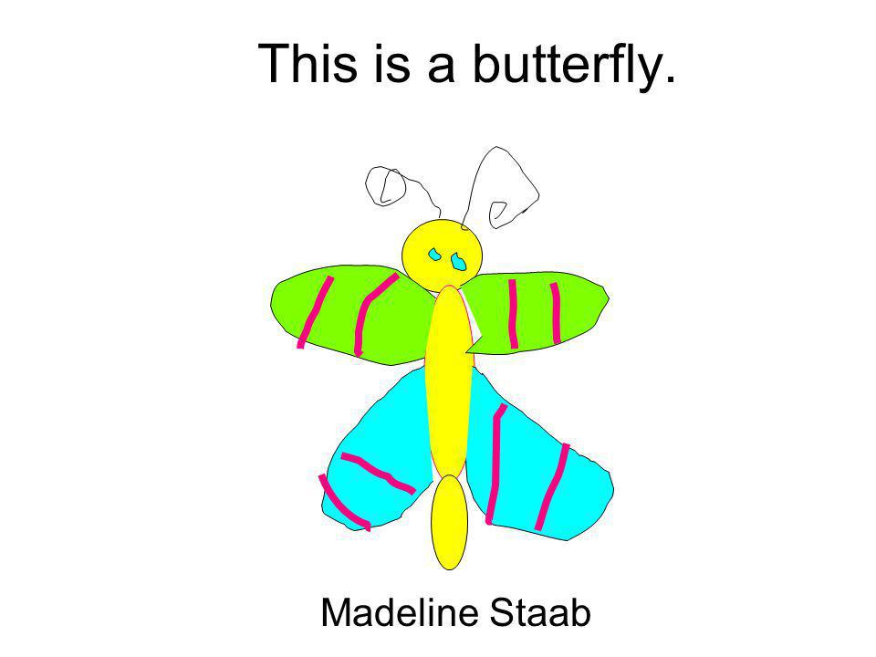 This is a butterfly. Madeline Staab