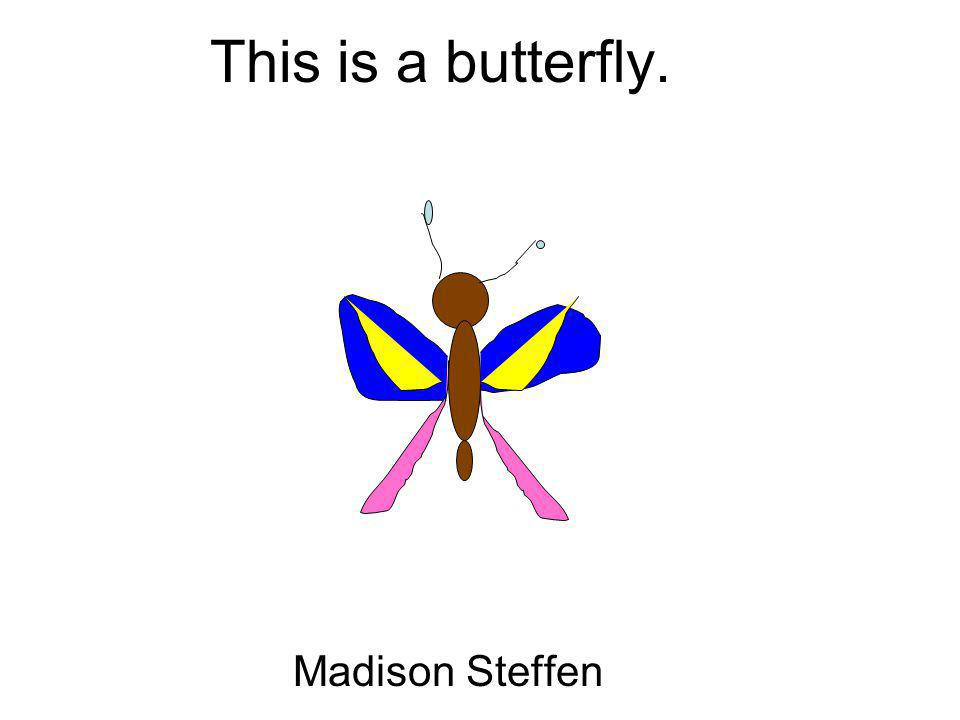 This is a butterfly. Madison Steffen